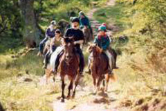 activity_horse_riding